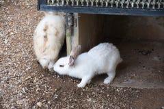 Rabbits bunny in the garden. Rabbits bunny animal Royalty Free Stock Photography