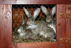Rabbits in cage Royalty Free Stock Photos