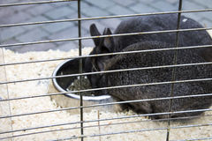 Rabbits in a cage Royalty Free Stock Photography