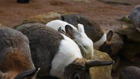 Rabbits stock footage