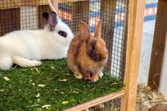 Rabbits in the cage. Close view Stock Photography