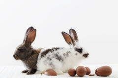 Rabbits with chocolate eggs. On white background Royalty Free Stock Images