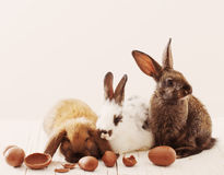 Rabbits with chocolate eggs Royalty Free Stock Image