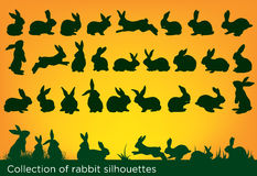 Rabbits collection Royalty Free Stock Photography