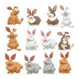 Rabbits with different fur colors Stock Images