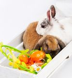 Rabbits and easter basket Stock Photo