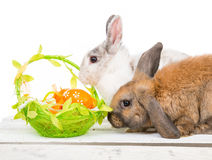Rabbits and easter basket Stock Image