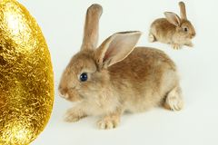 Rabbits with Easter egg Stock Photography