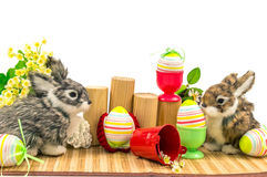 Rabbits and easter eggs Stock Photos