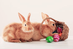 Rabbits with Easter eggs. On white background Stock Images