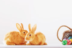 Rabbits with Easter eggs Royalty Free Stock Photos