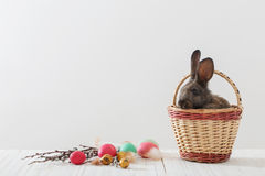 Rabbits with Easter eggs. On white background Royalty Free Stock Images