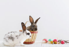 Rabbits with easter eggs Stock Image