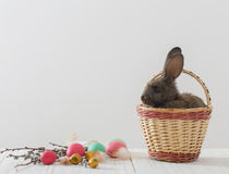 Rabbits with Easter eggs. On white background Stock Photos