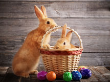 Rabbits with Easter eggs Stock Photos