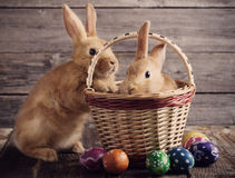 Rabbits with Easter eggs Royalty Free Stock Photography