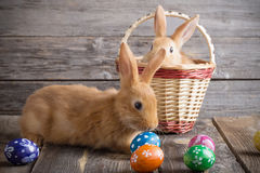 Rabbits with Easter eggs. On wooden background Royalty Free Stock Image