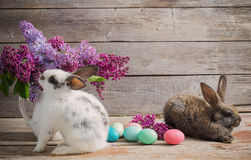 Rabbits with Easter eggs. On wooden background Stock Image