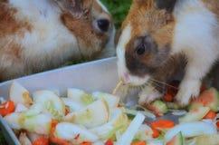 Rabbits Eating Veggies Royalty Free Stock Photo