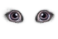 Rabbits eye very