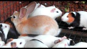 Rabbits family stock footage