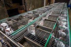 Rabbits on the farm Stock Photo