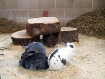 Rabbits in a farm Stock Photo
