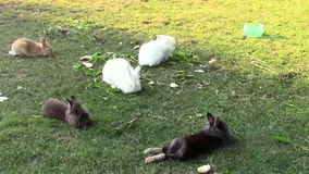 Rabbits. Fluffy rabbits in the field stock video