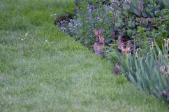 Rabbits in the garden. On green grass Royalty Free Stock Image