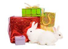 Rabbits with gifts Royalty Free Stock Image