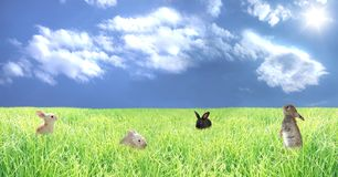 Rabbits on a glade Stock Photos