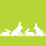 Rabbits in grass Stock Photography