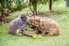Rabbits in the grass Stock Photos