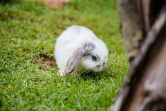 Rabbits in the grass at garden Stock Photography