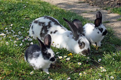 Rabbits on grass Stock Photos