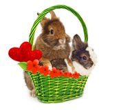 Rabbits and green basket with hearts Stock Photos