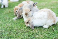 Rabbits on green grass outdoor. Rabbits on green grass Stock Photography