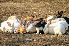 Rabbits. Royalty Free Stock Photos