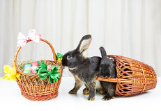 Rabbits have dropped out of the basket on a white background Stock Images