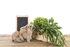 Rabbits with herbs Stock Photography