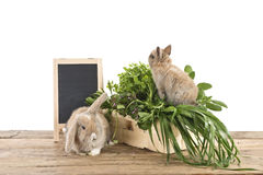 Rabbits with herbs Stock Photos