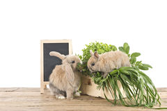 Rabbits with herbs Royalty Free Stock Photos