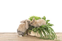 Rabbits with herbs Royalty Free Stock Photo