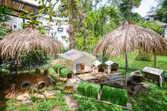 Rabbits house in garden Stock Photography