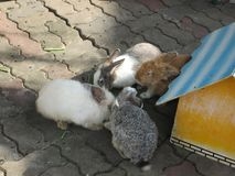 Rabbits and house in thailand zoo royalty free stock photos