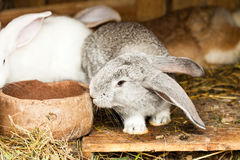 Rabbits' hutch Stock Photography