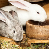 Rabbits' hutch Royalty Free Stock Images