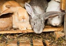 Rabbits' hutch Stock Photo