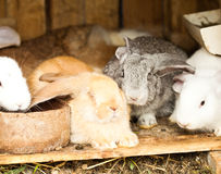 Rabbits' hutch Royalty Free Stock Photo
