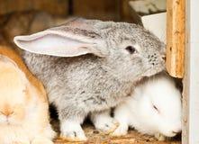Rabbits' hutch Royalty Free Stock Photos